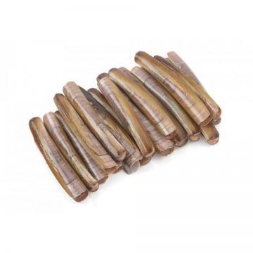 Hetlozevissertje Diepvries Mesheften (enkel afhaling) bruin - wit levend aas 1/2kg