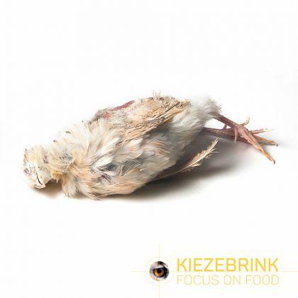 Kiezenbrink Ex-layer Kwartel 8kg (enkel afhaling) wit - bruin voeding roofvogels