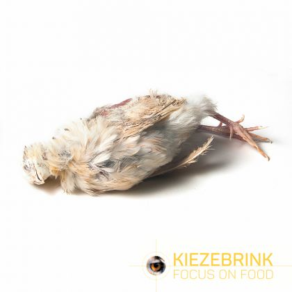 Kiezenbrink Ex-layer Kwartel Per St (enkel afhaling) wit - bruin voeding roofvogels