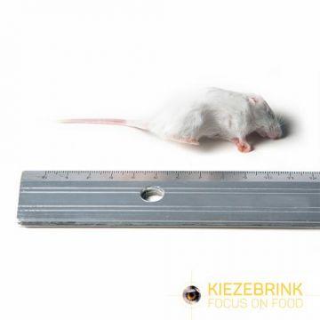Kiezenbrink Kwaliteit Muis Per Stuk (enkel afhaling) wit voeding roofvogels