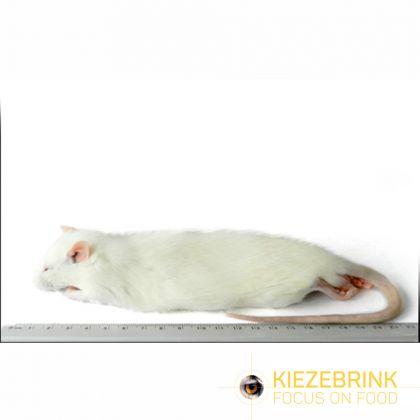 Kiezenbrink Regular Rat 150-250g Stuk enkel afhaling wit - bruin voeding roofvogels