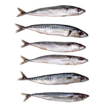 Prebaits Kleine Makreel (enkel afhaling) wit - grijs